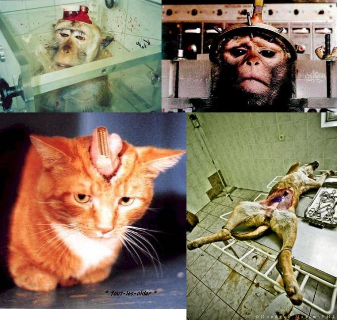 vivisection_4