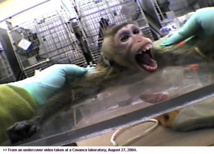 vivisection_5
