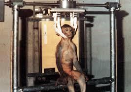 devraj89.blogspot.com | http://3.bp.blogspot.com/-ePdXu89wb04/T9g9OEfKypI/AAAAAAAAABM/Ap8CzOLdpnE/s320/monkey.gif
