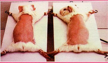 Test Animali | http://www.kazior5.com/fotki/wiwisekcja5.jpg